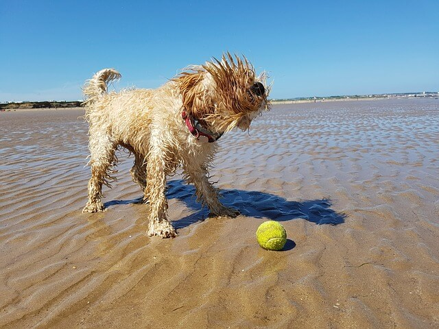 Dog friendly beaches on Anglesey